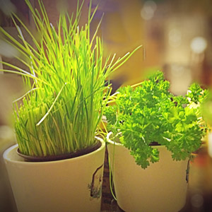 Reiki22 - gesunde Energie - grüne Smoothies